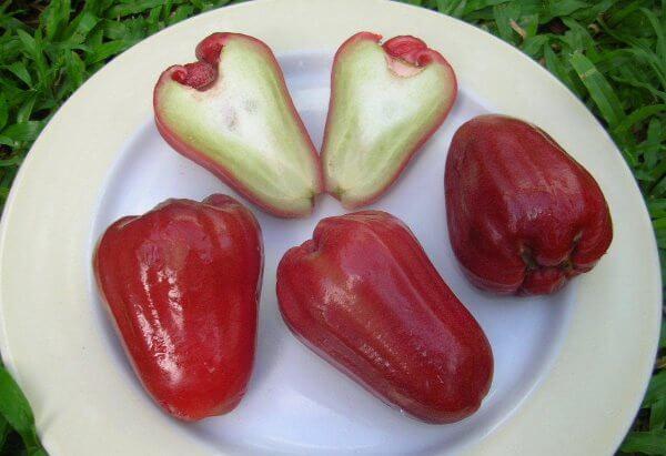 Фото: фрукт Чомпу в разрезе