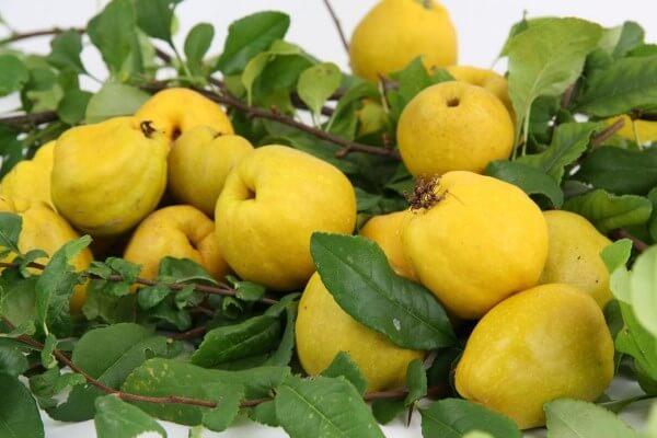 Фото: фрукт Хеномелес