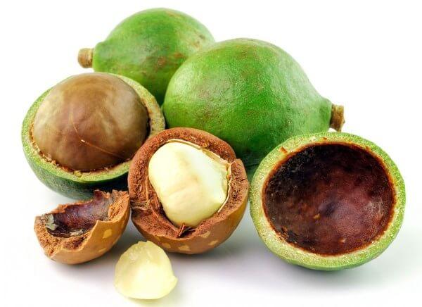 Фото: как выглядит орех Макадамия